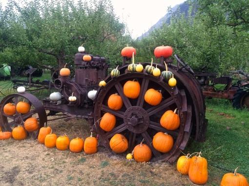 Parsons - Tractor & Pumpkins