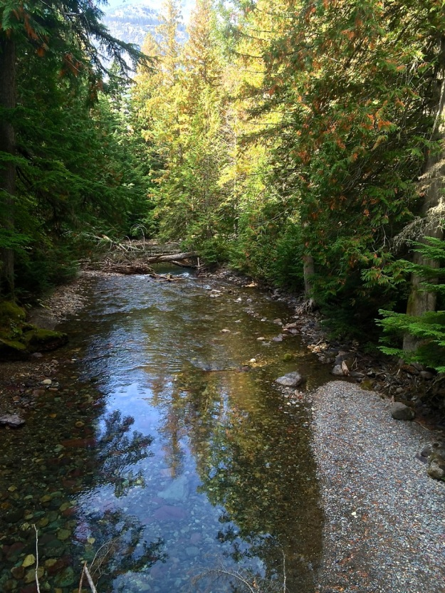 Reflections - Trail of Cedars