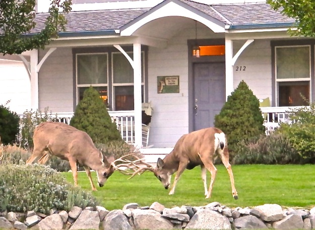 Deer Territory