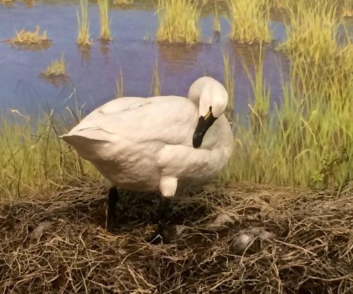 Goose - RSM