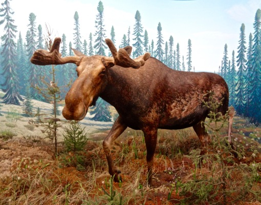 Moose - RSM