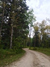 RMNP - Dirt Road