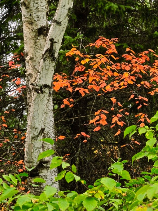 RMNP - Fall Foliage