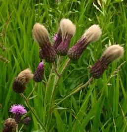 RMNP - Floral Buds