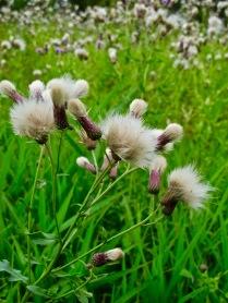 RMNP - Floral Fluff