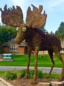 RMNP - Floral Moose