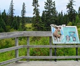 RMNP - Moose Sign