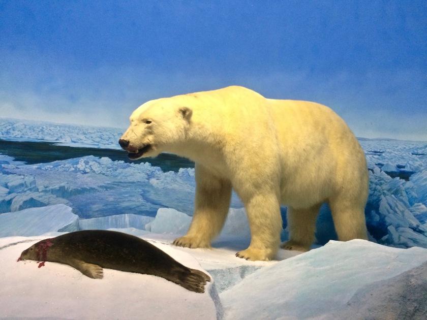 MM - Polar Bear