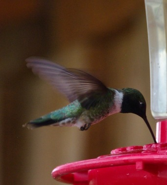 Humming Bird - B&B in Pagosa Springs