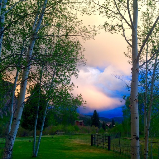 South Fork Evening Light Through the Aspen