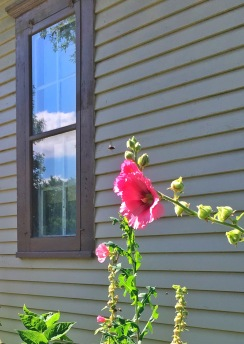 window-hollyhock